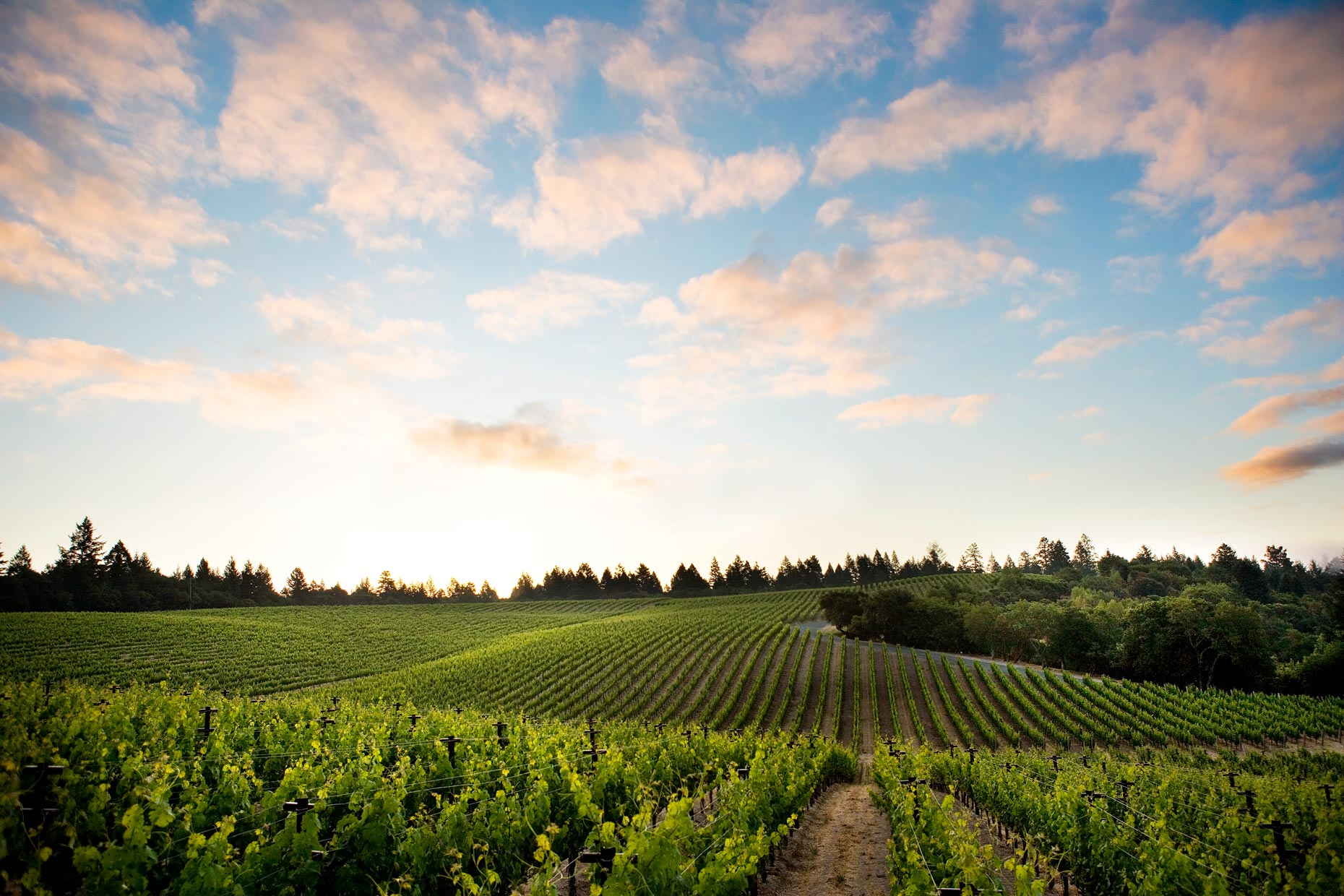 Napa_Sloan_dawn_vineyard_5934